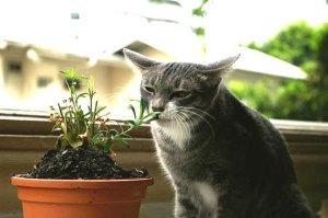 kitty-plant